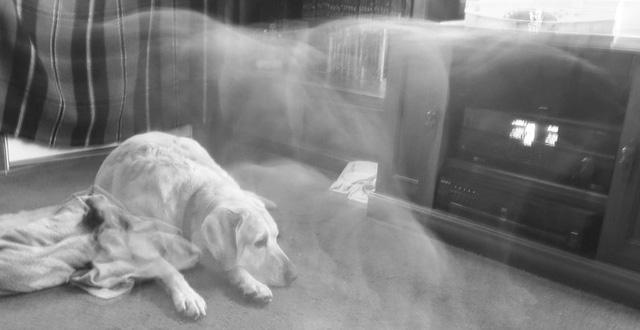 Chó Chu Sủa về đêm