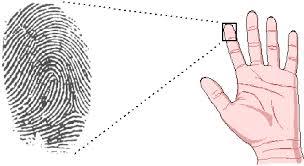 Xem bói vân tay có vòm trụ lệch về phía bên phải